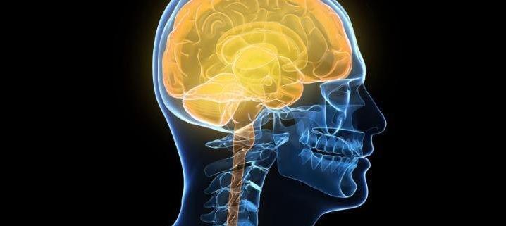 human-brain_3392751a-large-large_trans2oUEflmHZZHjcYuvN_Gr-bVmXC2g6irFbtWDjolSHWg